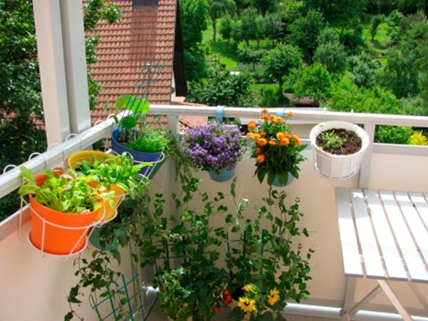 gardening_in_a_small_space_we_have_it_covered
