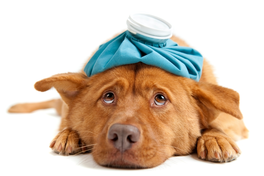 what_do_i_do_if_my_dog_is_sick