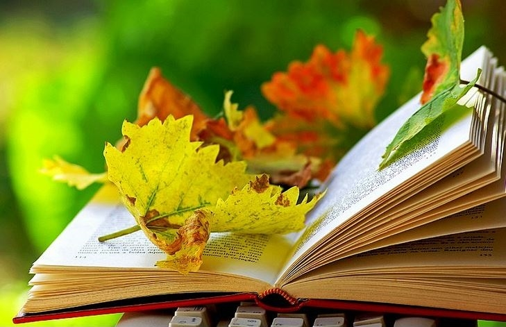 choiceful_stop_autumn_reads